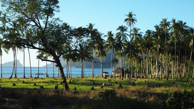 El Nido : Las cabanas