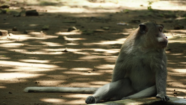 Monkey Forest Sanctuary