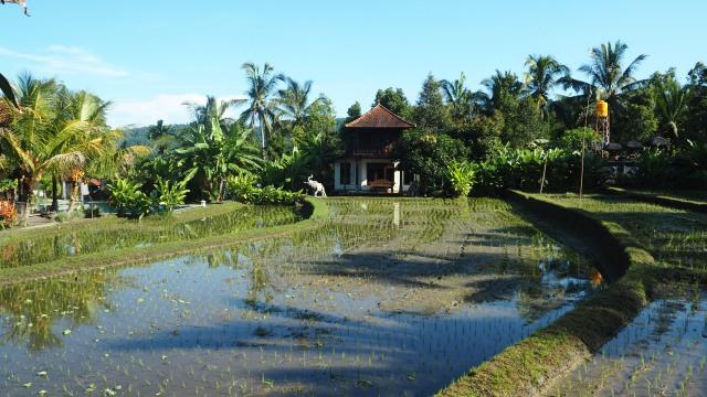 Hôtel à Banyuatis